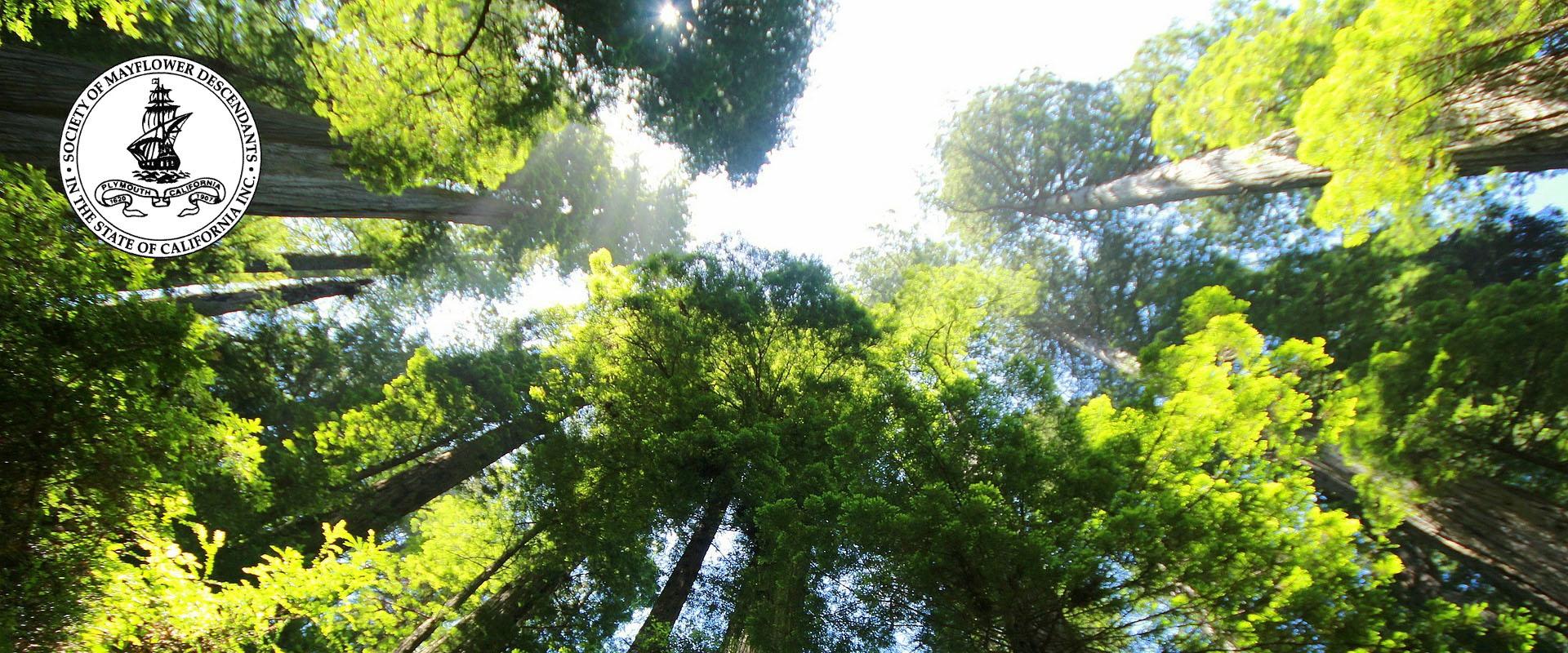 Sequoia Colony